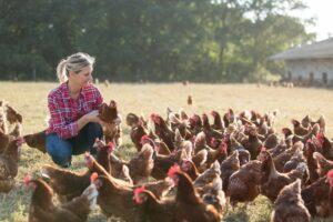 Poultry Farm Insurance in Alpharetta, GA